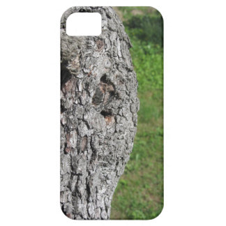 Pear tree trunk against green background iPhone 5 cases