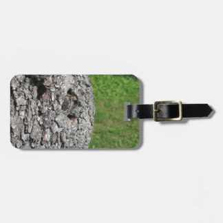 Pear tree trunk against green background luggage tag
