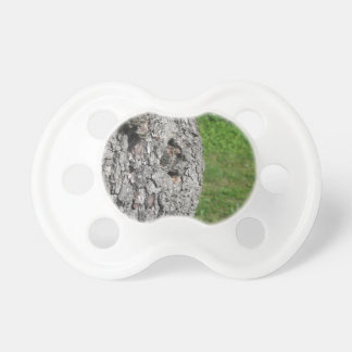 Pear tree trunk against green background pacifier