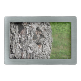 Pear tree trunk against green background rectangular belt buckles