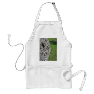 Pear tree trunk against green background standard apron