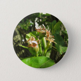 Pear tree twig with buds in spring  Tuscany, Italy 2 Inch Round Button