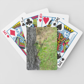 Pear tree twig with buds in spring  Tuscany, Italy Bicycle Playing Cards