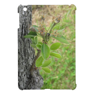 Pear tree twig with buds in spring  Tuscany, Italy Case For The iPad Mini