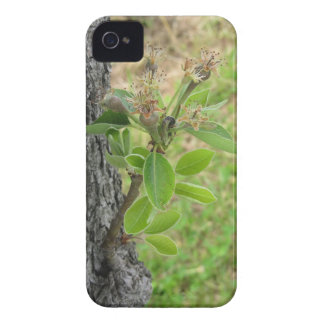 Pear tree twig with buds in spring  Tuscany, Italy Case-Mate iPhone 4 Case