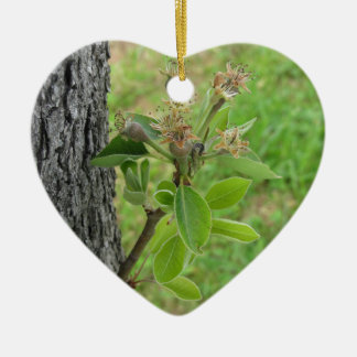 Pear tree twig with buds in spring  Tuscany, Italy Ceramic Heart Ornament