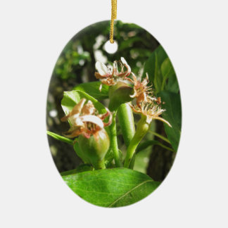 Pear tree twig with buds in spring  Tuscany, Italy Ceramic Oval Ornament