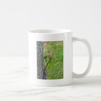 Pear tree twig with buds in spring  Tuscany, Italy Coffee Mug