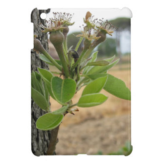Pear tree twig with buds in spring  Tuscany, Italy Cover For The iPad Mini