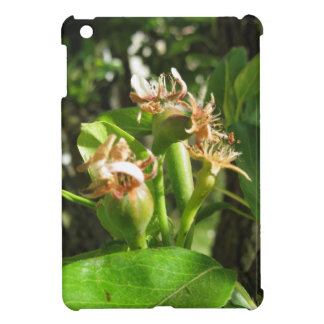 Pear tree twig with buds in spring  Tuscany, Italy iPad Mini Covers