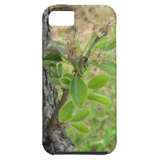 Pear tree twig with buds in spring  Tuscany, Italy iPhone 5 Case