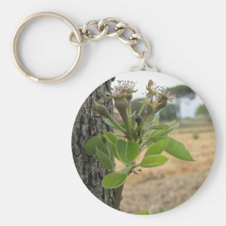 Pear tree twig with buds in spring  Tuscany, Italy Keychain