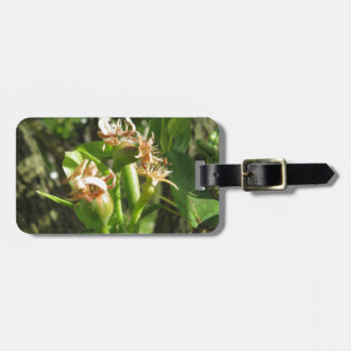 Pear tree twig with buds in spring  Tuscany, Italy Luggage Tag