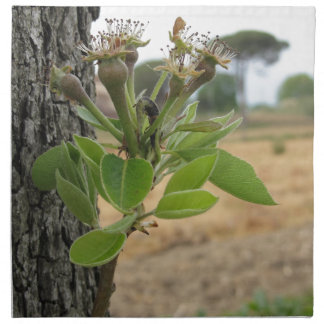 Pear tree twig with buds in spring  Tuscany, Italy Napkin