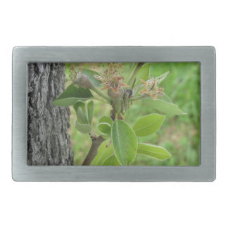 Pear tree twig with buds in spring  Tuscany, Italy Rectangular Belt Buckle