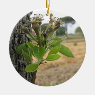 Pear tree twig with buds in spring  Tuscany, Italy Round Ceramic Ornament