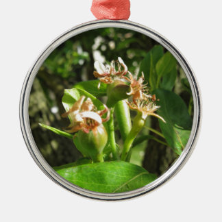 Pear tree twig with buds in spring  Tuscany, Italy Silver-Colored Round Ornament