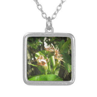 Pear tree twig with buds in spring  Tuscany, Italy Silver Plated Necklace