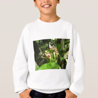 Pear tree twig with buds in spring  Tuscany, Italy Sweatshirt