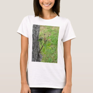 Pear tree twig with buds in spring  Tuscany, Italy T-Shirt