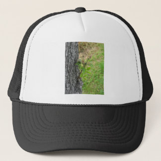 Pear tree twig with buds in spring  Tuscany, Italy Trucker Hat