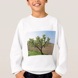 Pear tree with blossoms in a sunny day sweatshirt