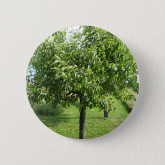 Pear tree with green leaves and red fruits 2 inch round button