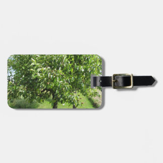 Pear tree with green leaves and red fruits luggage tag