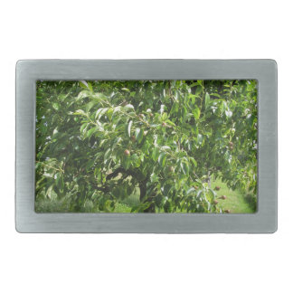 Pear tree with green leaves and red fruits rectangular belt buckle