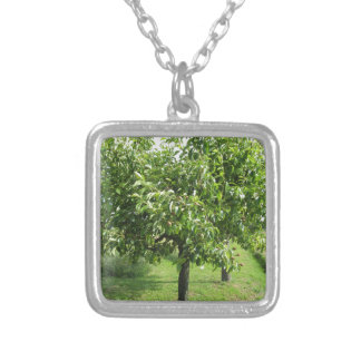 Pear tree with green leaves and red fruits silver plated necklace