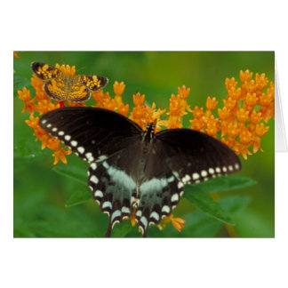 Pearl Crescent Butterfly Card
