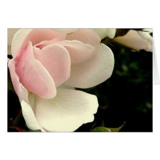 Pearl Rose Notecard (blank)