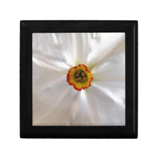 pearl white narcissus gift box