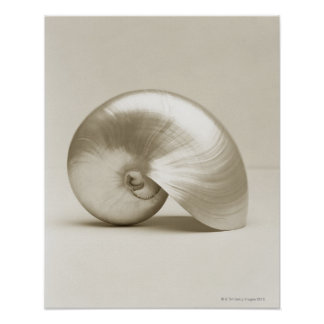 Pearlised nautilus sea shell poster