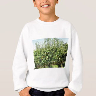 Pears on tree branches sweatshirt