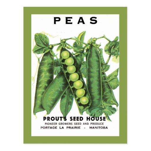 Peas Seed Packet Postcards
