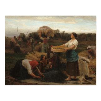 Peasant Women Harvesting  Rapeseed by Jules Breton Postcard