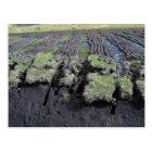 Peat Cutting In Ireland Postcard