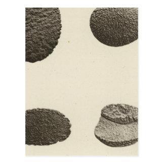 Pebbles carved by sand, Colorado River Postcard