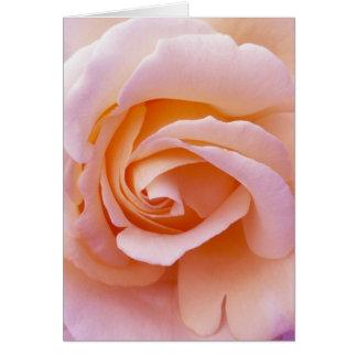 Pêche de jardin et rose anglais de rose carte de vœux
