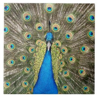 Pedro Peacock Feathers Colorful Bird Peafowl Tile