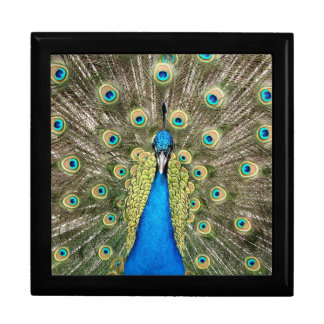 Pedro Peacock Feathers Colorful Wild Bird Peafowl Gift Box