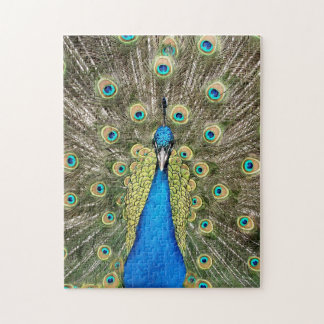 Pedro Peacock Feathers Colorful Wild Bird Peafowl Jigsaw Puzzle