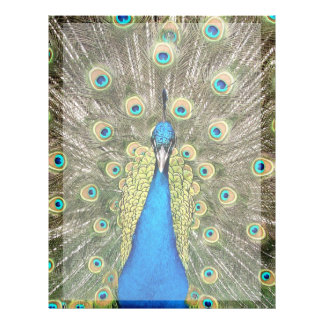 Pedro Peacock Feathers Colorful Wild Bird Peafowl Letterhead