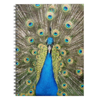 Pedro Peacock Feathers Colorful Wild Bird Peafowl Notebook