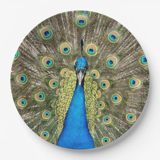 Pedro Peacock Feathers Colourful Wild Bird Peafowl 9 Inch Paper Plate