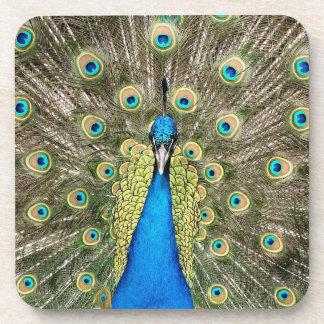 Pedro Peacock Feathers Colourful Wild Bird Peafowl Coaster