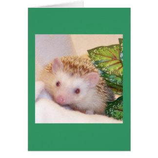 Peek a boo hedgehog card