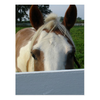 Peek a Boo Horse Postcard