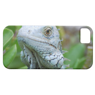 Peek-a-boo Iguana iPhone 5 Cases